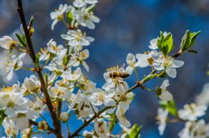 pollen PureAirZone